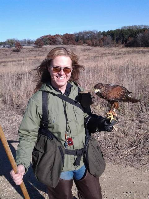 Natalie hunting with her Harris's Hawk, Bam Bam.