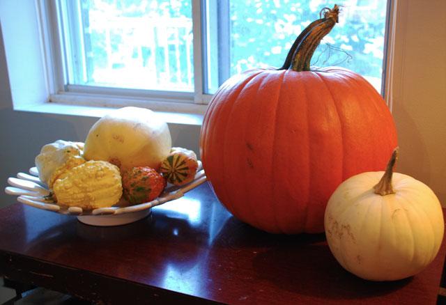 It's always festive fucking gourd season at my house.