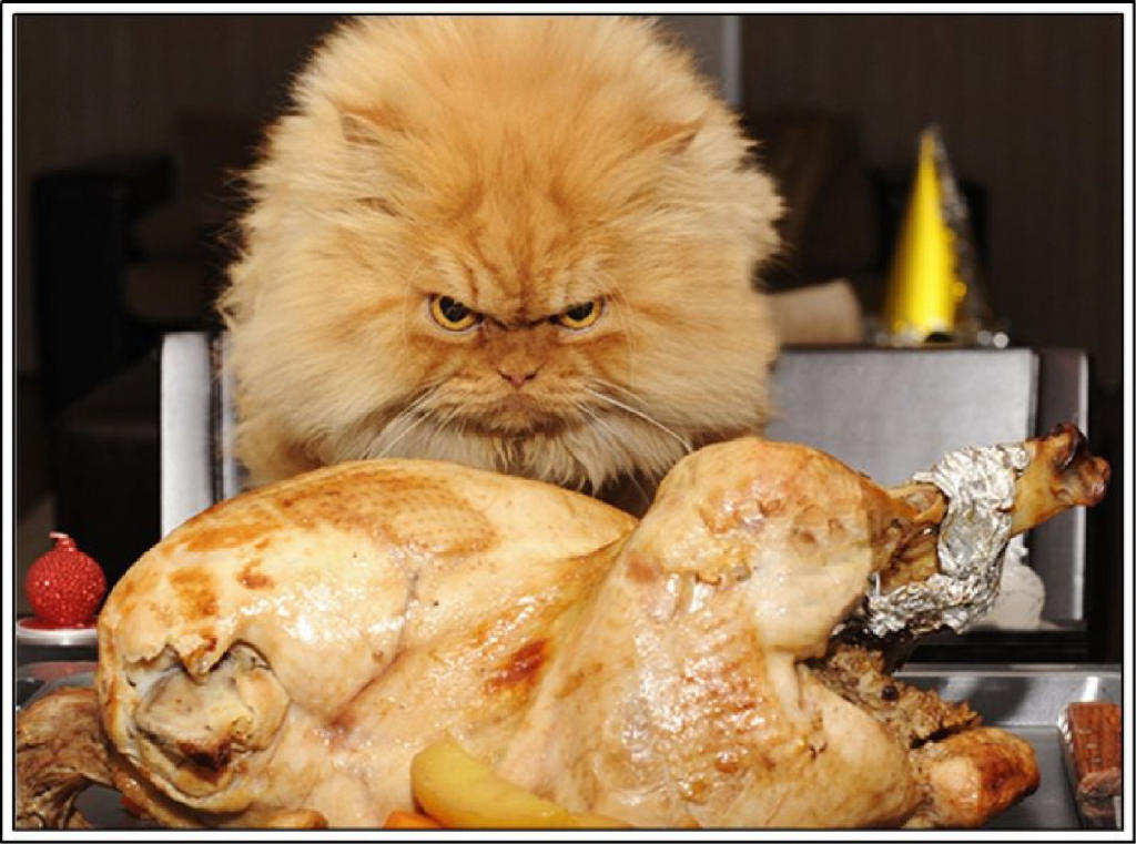 ARE YOU FRUSTRATED BY THE TURKEY