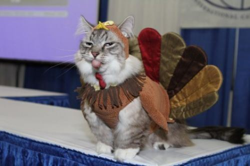 ARE YOU LOOKING FORWARD TO THE TURKEY