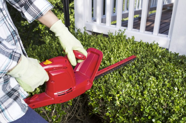 hedge_trimmer-620x412
