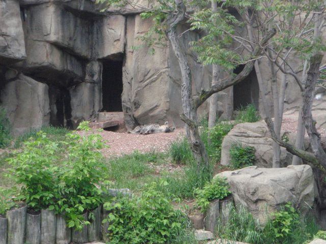 The Lincoln Park Zoo hyenas: what a cool office-window view. Via http://dynamicecology.wordpress.com/2013/06/12/advice-finding-a-career-in-non-academic-research-guest-post/