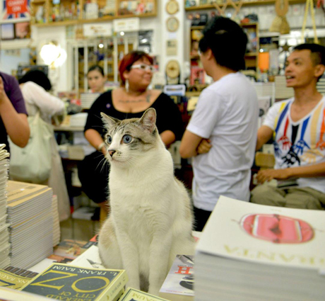 Here is a cat at the book launch to make everyone feel better. via Robin Ann Rheaume