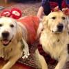 Barkley & Dexter. THOSE FACES!