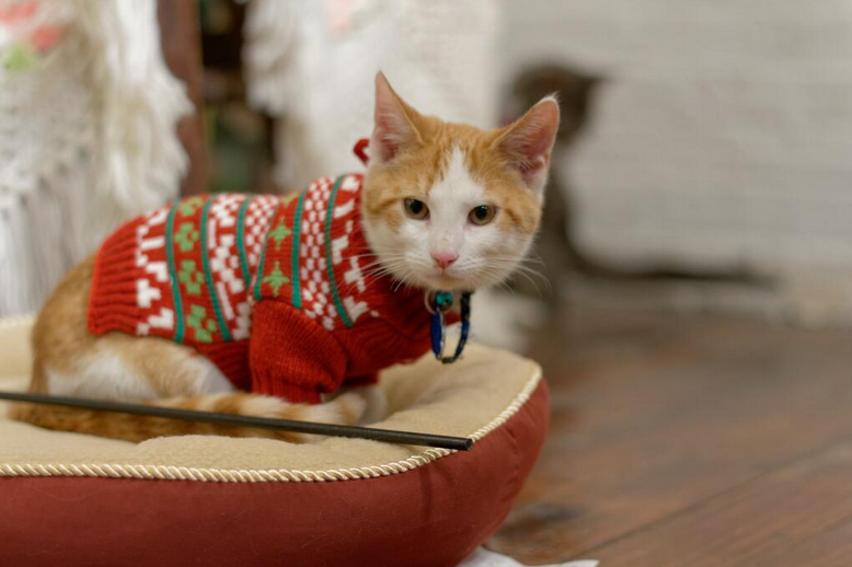 Live Feed: Christmas Cats TV is a Roomful of Cats in Holiday Sweaters