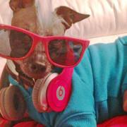 beatsdog
