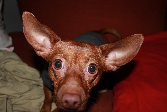 Laura's dog, Bokchoy