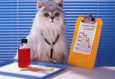 cat_doctor1