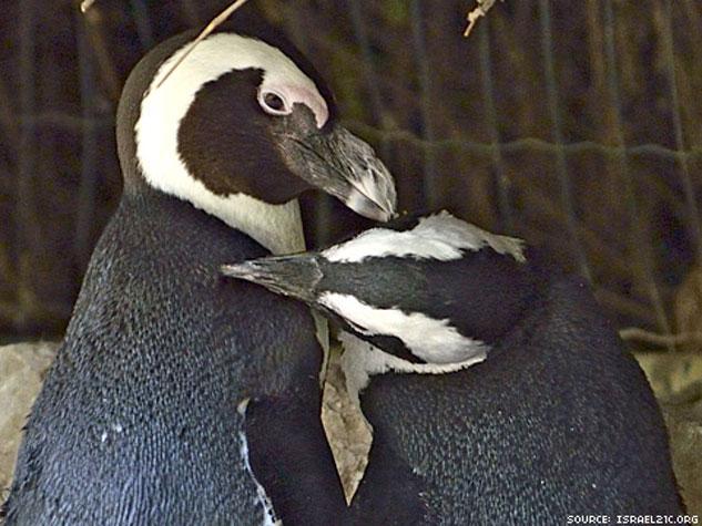penguinsinner