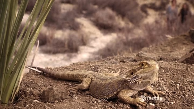 You can't cuddle a lizard either.
