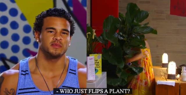flips a plant