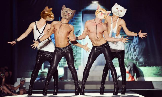 gay-cats