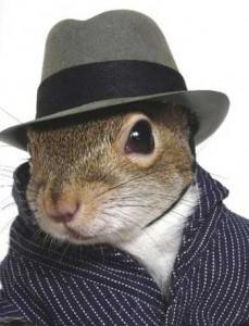 business squirrel