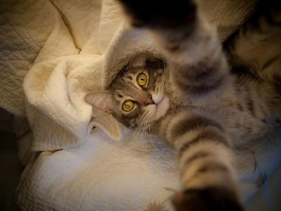 cat bed selfie