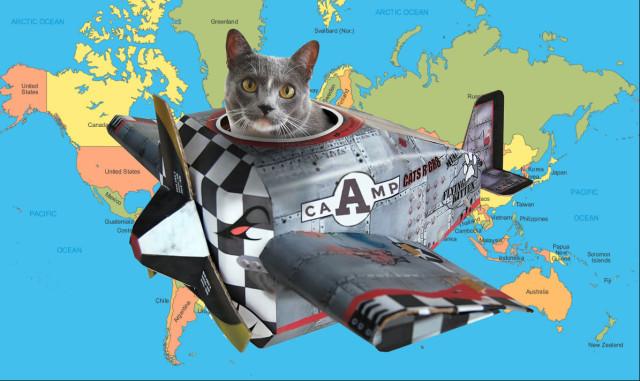 cat-in-a-plane