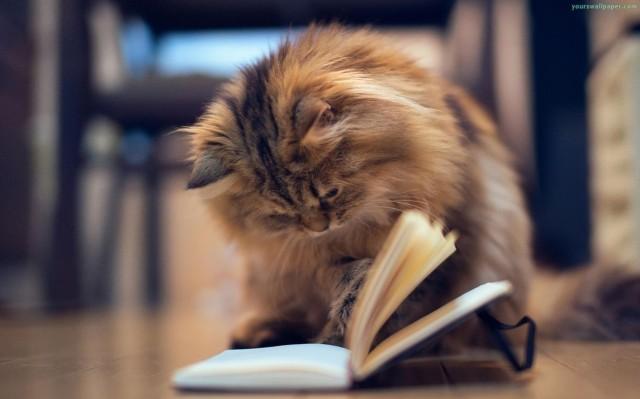 daisy-cat-ben-torode-reading-book_2332