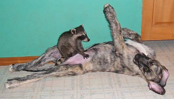 hwapb-animal-friendship-at-rocky-ridge-refuge-10
