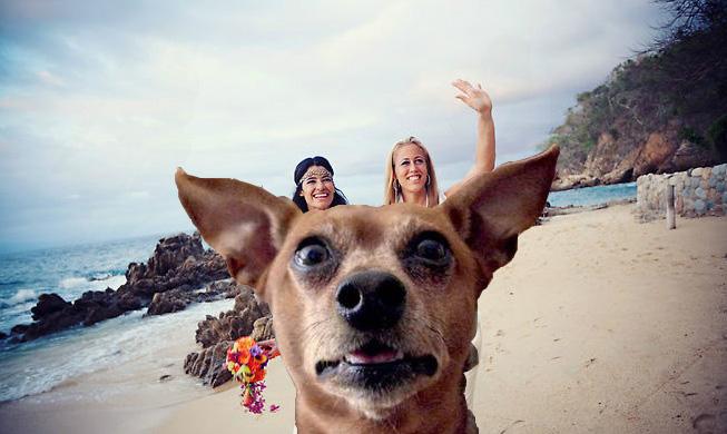 lesbian beach photobomb dog