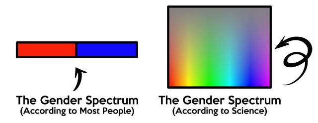 GenderGraphicTS