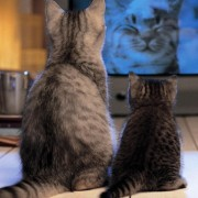 cats_watching_tv-normal