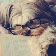 dog-reading