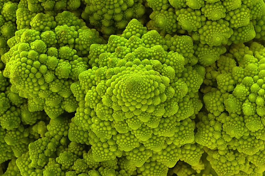 Romanesco Via Fourmilan Fractal Food