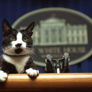 Socks delivering a briefing.
