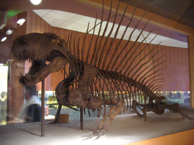 via fossilmuseum.net