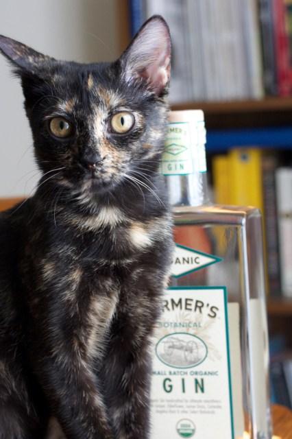 Kitten approved!