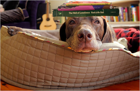 dog with books on its head