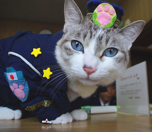 police-cat-2