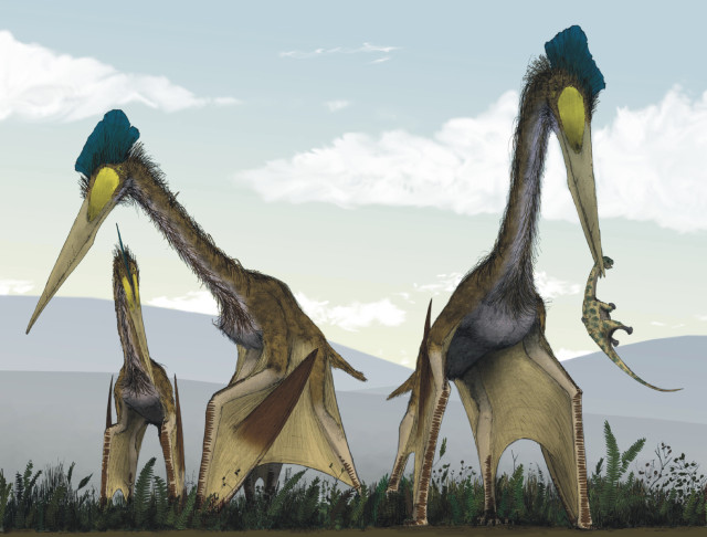 What even is that?!?! (It's a Quetzalcoatlus) via about.dinosaurs.com