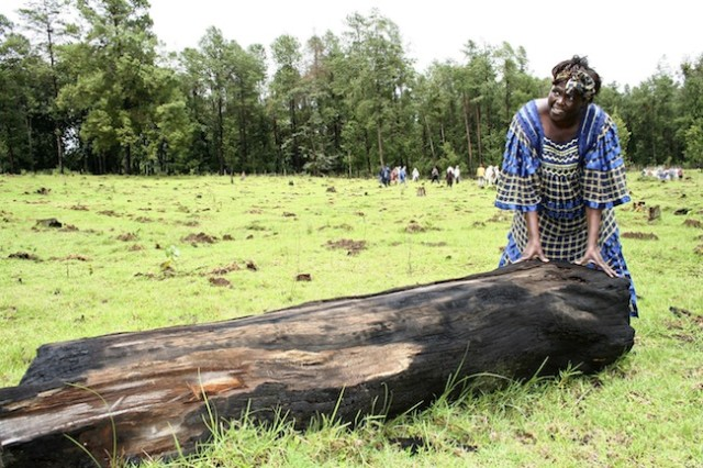 Image: File photo of Nobel prize laureate Wangari Maathai touching a tree stump cut by illegal loggers during a ceremony to plant trees in Sabatia forest