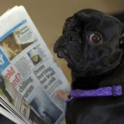 0000000264-c6be2ceb7751293c11c052798371155a-dog-reading-newspaper