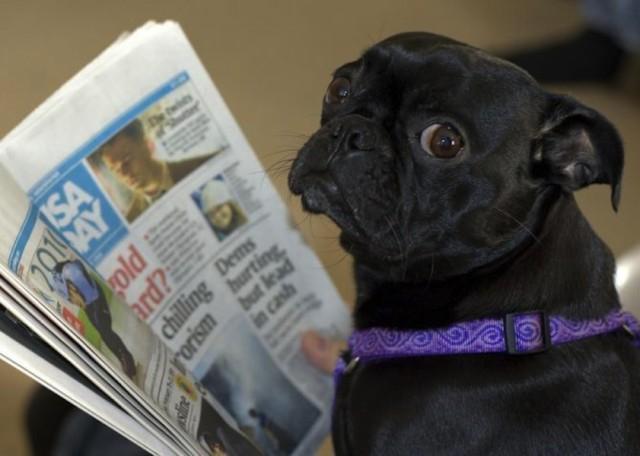 0000000264-c6be2ceb7751293c11c052798371155a-dog-reading-newspaper