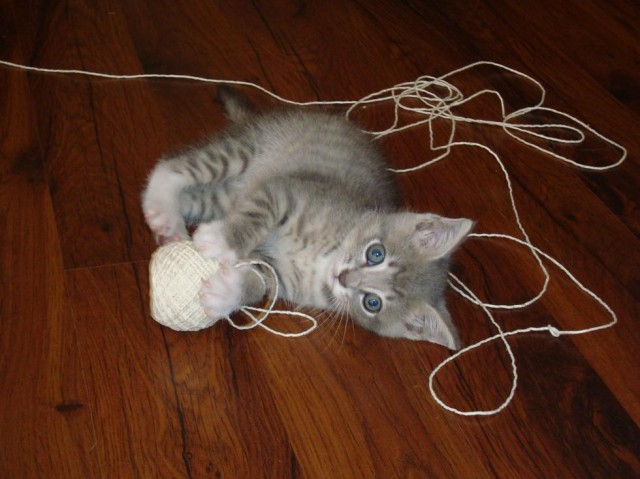 Not that kind of string (via caterville.tumblr.com)