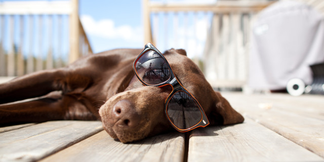 o-DOG-IN-SUNGLASSES-facebook