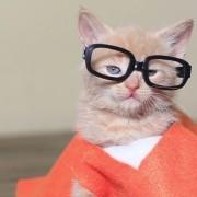 o-OITNB-CAT-PARODY-facebook