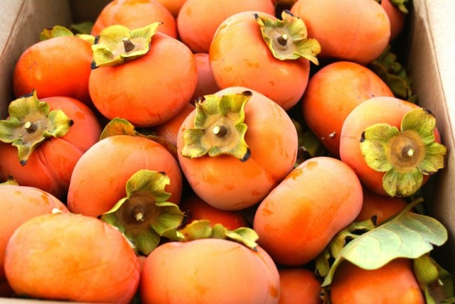 persimmon-tree-1