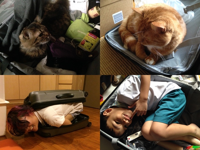 Various creatures I have unsuccessfully attempted to bring with me across the oceans: (clockwise from top left) Singapore cat, London cat, small brother, not-small girlfriend