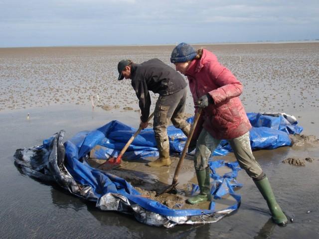 via ZenScience Ecologist Serena Donadi doing fieldwork in Dutch tidal flats
