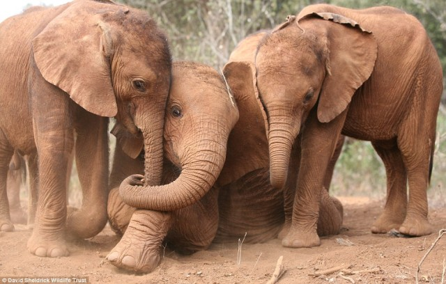 Suguta, Kibo and Nchan playing at Tsavo National Park in Nairobi