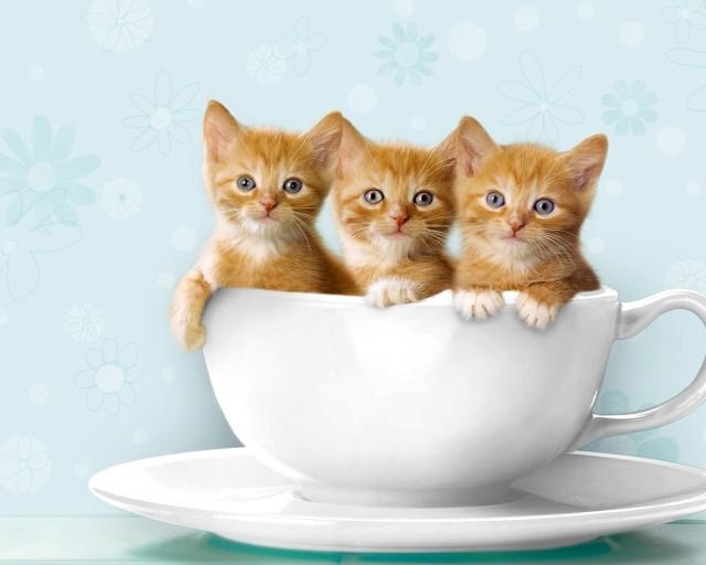 -_-cats-cats-22066039-1280-1024