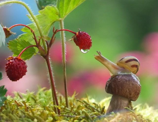 unrelated yet DEEPLY BEAUTIFUL snail imagery via Vyacheslav Mishchenko