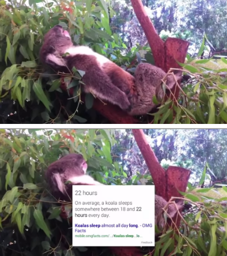 bc what kind of weirdo doesn't love a sleepy koala?