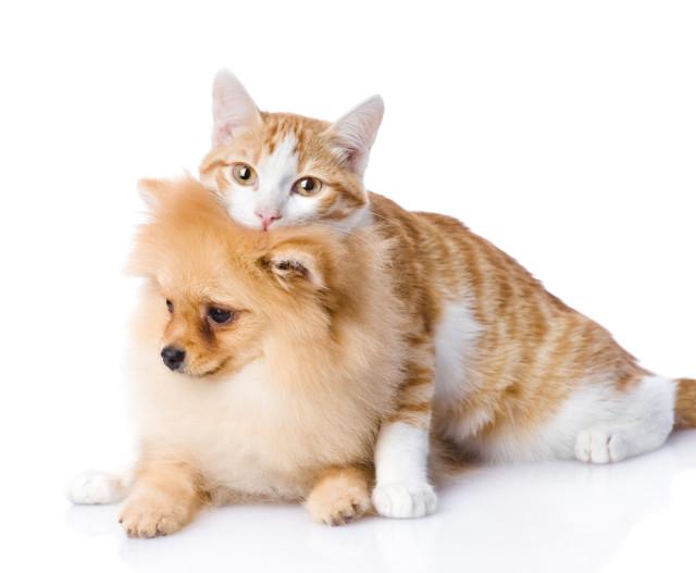 cat-hug