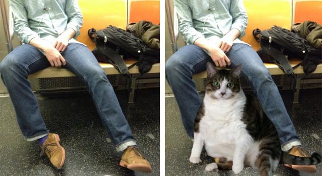 via Saving Room for Cats