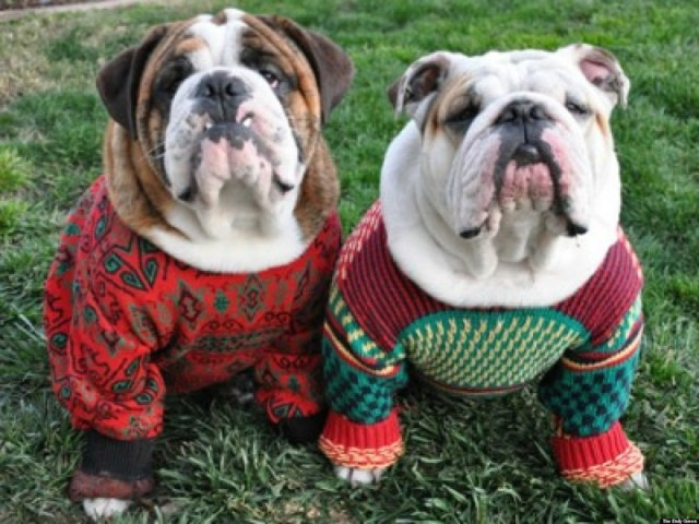 dogsinsweaters
