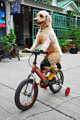 a 100% accurate photo of me and my bike vis bondibeachcruisers