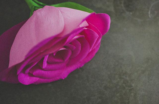 diy-giant-paper-rose-16
